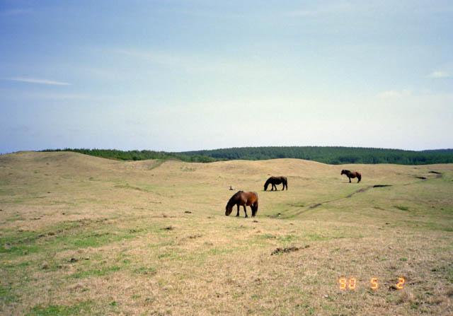 尻屋崎の牧場