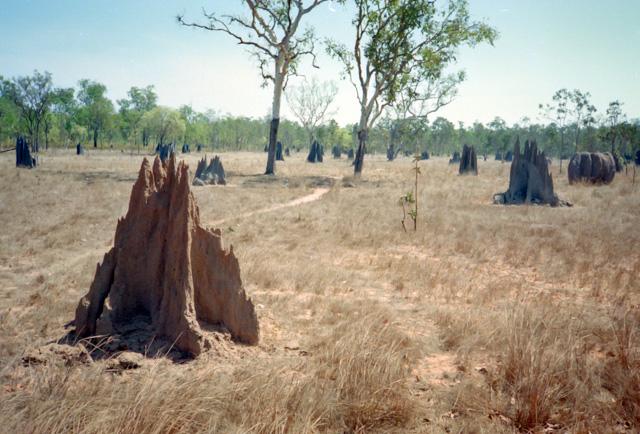 ケープヨークの蟻塚