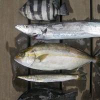 fish_2011 003