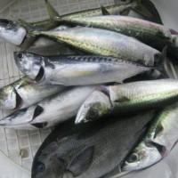 fish_2011 004