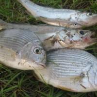 fish_2011 005