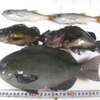 fish_2011 007