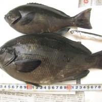 fish_2011 010