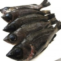 fish_2011 011