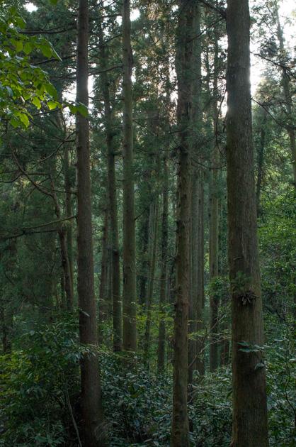 森戸林道の緑