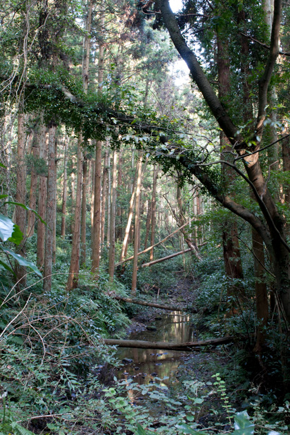 森戸林道の川