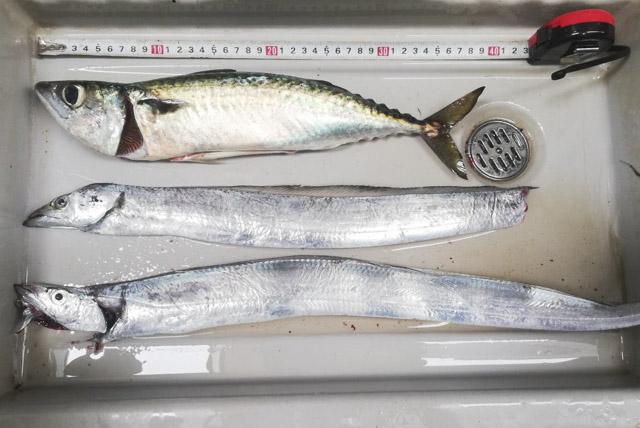 タチウオ 横須賀 福よし丸のページ(釣果)