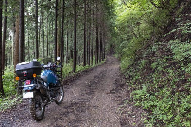 林道・剣ヶ峰七重線の美しい森の道