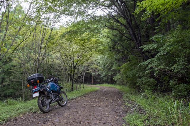 林道・剣ヶ峰七重線の緑の綺麗な区間