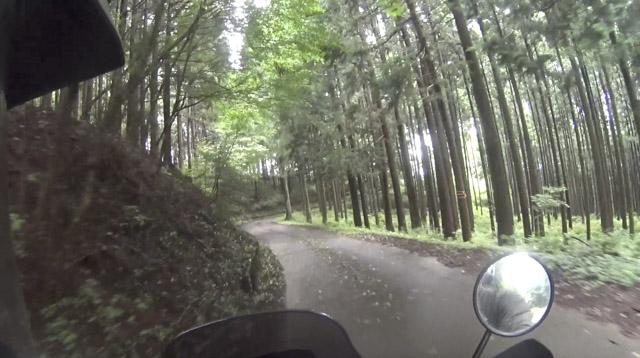 林道・栗山七重線の杉林
