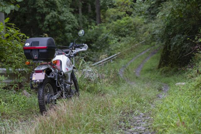 林道・井戸入線 緩いアップダウンのある区間