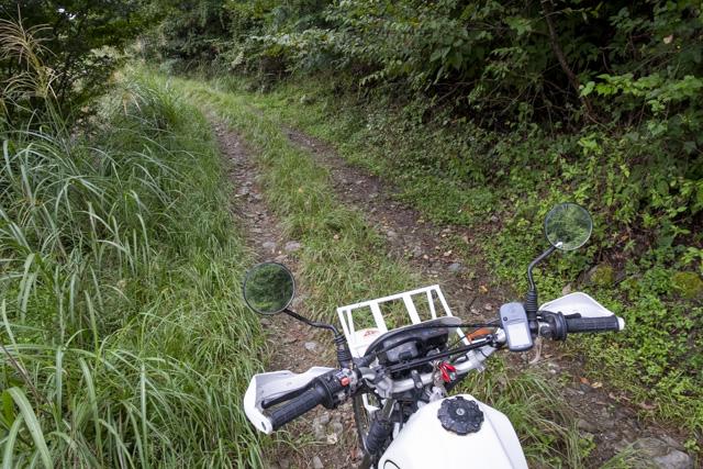 林道・井戸入線の道