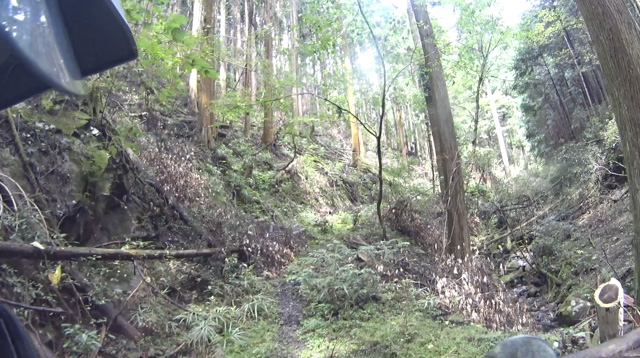 林道・湯ノ花線の山道