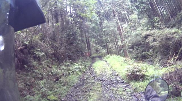 林道・湯ノ花線のまともな区間