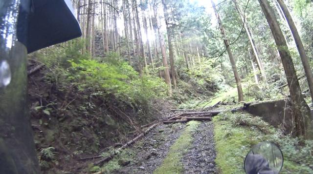 林道・湯ノ花線の倒木