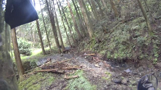 林道・湯ノ花線の枯れ枝