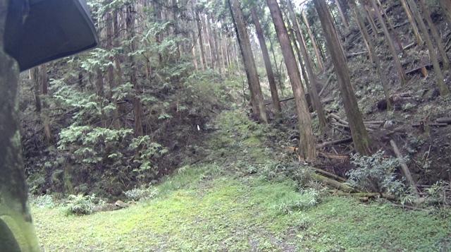 林道・湯ノ花線の先に続く山道