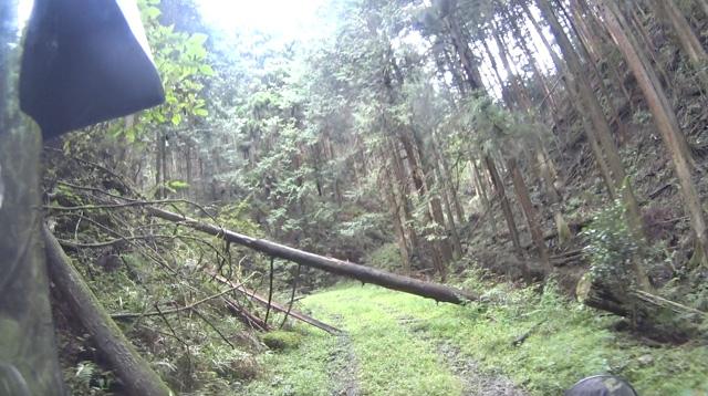 林道・湯ノ花線の斜めに倒れた木