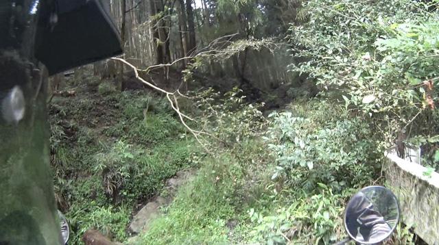 林道・湯ノ花線のダート入口の木