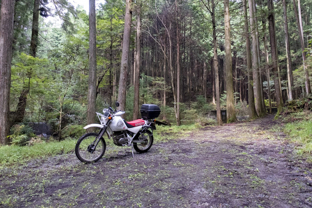 林道・桐の木平線の終点