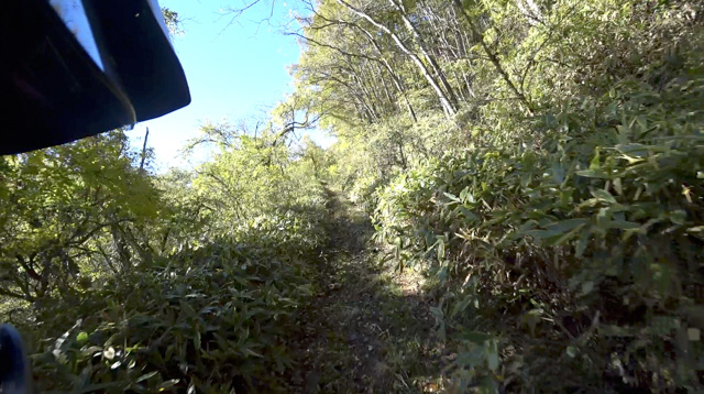 茨沢林道(八ヶ岳林道)