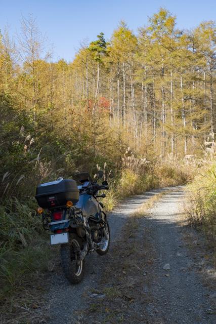 横尾山林道