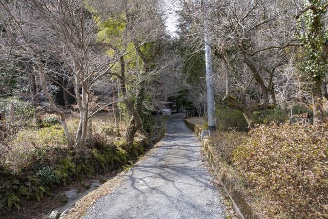 秩父御嶽神社・東郷公園の参道