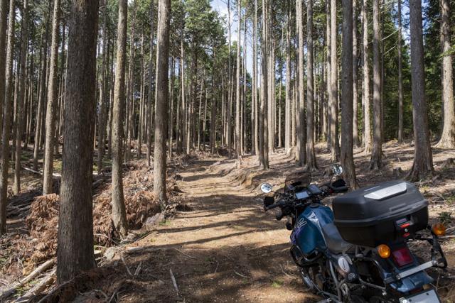 伊豆の林道