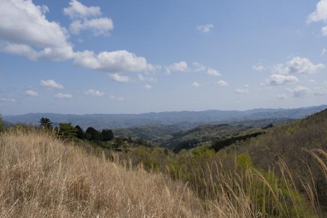 林道・達磨山線からの風景