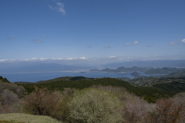 達磨山展望台