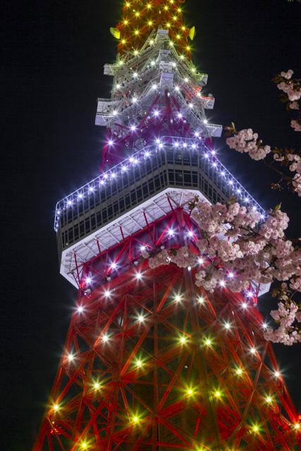 八重桜と新緑色の東京タワー