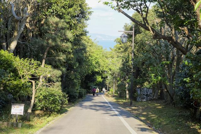 くりはま花の国の道