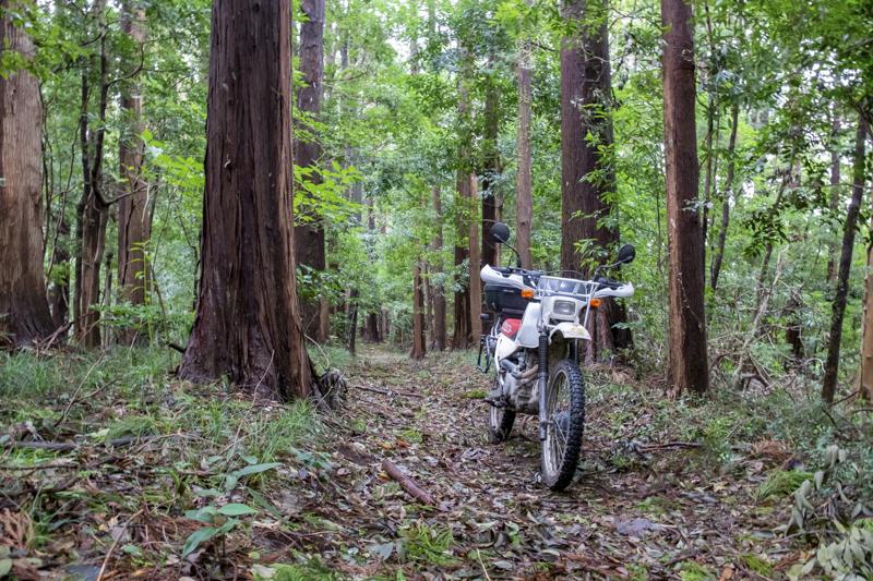 林道支線散策