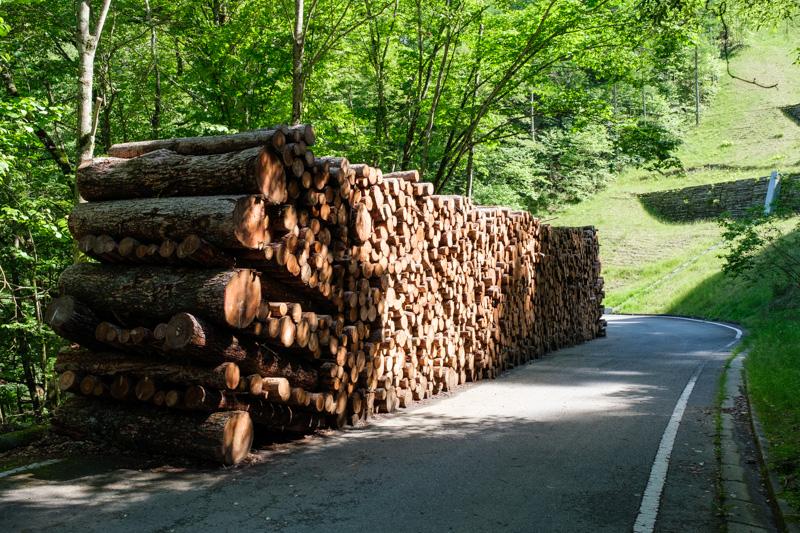 御荷鉾スーパー林道・伐採された木