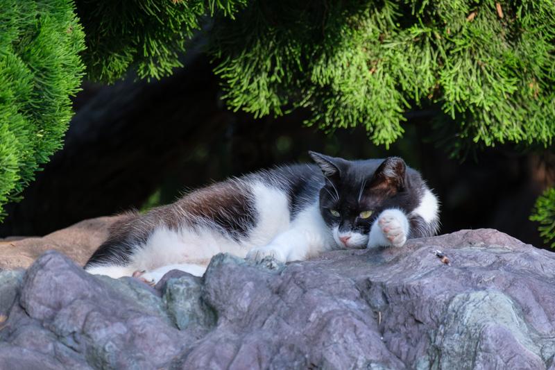 ヴェルニー公園にいた猫