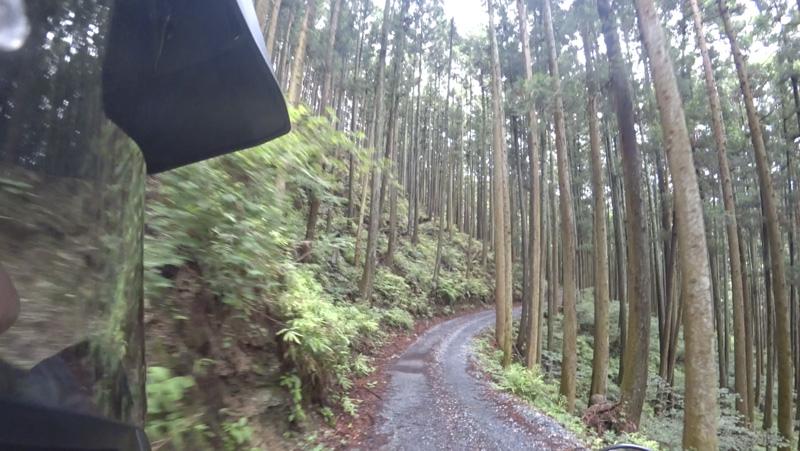 林道 根際線の杉林