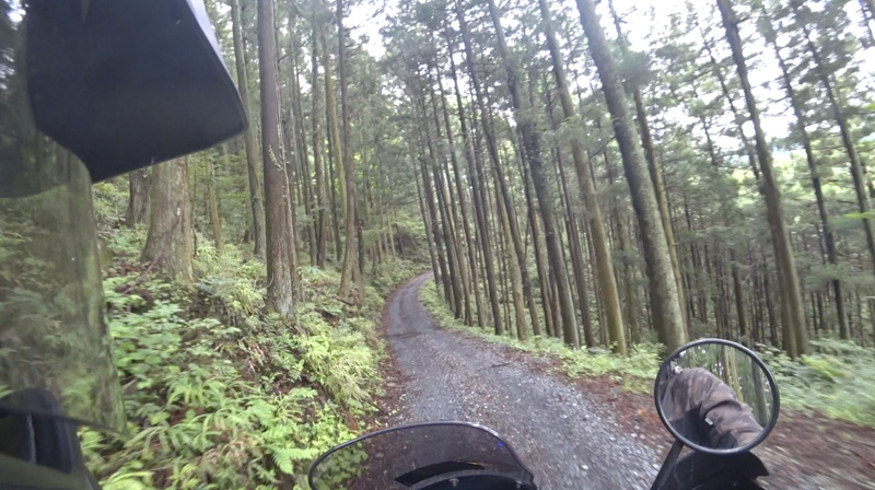 林道 根際線の美しい森