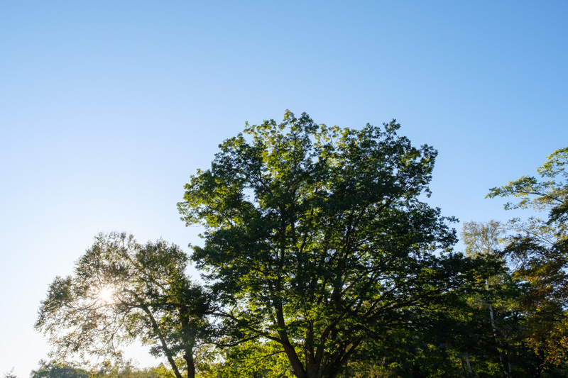 見上げた木
